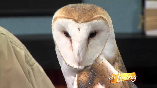 Barney- the Barn Owl- from Scovill Zoo_20150715221626