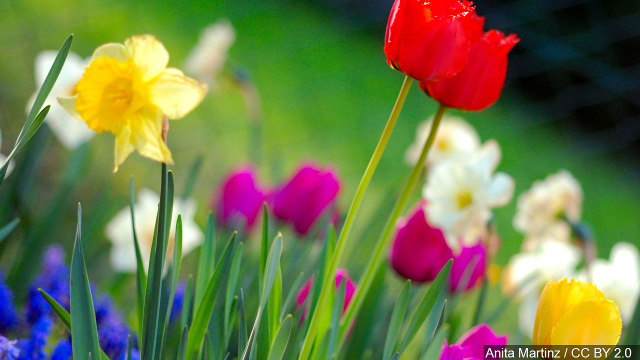 flower garden_1460064089442.jpg