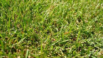 grass-lawn-closeup-jpg_20151109163932-159532