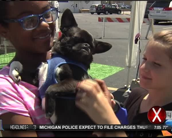 Pounds for Pets_20160609003606