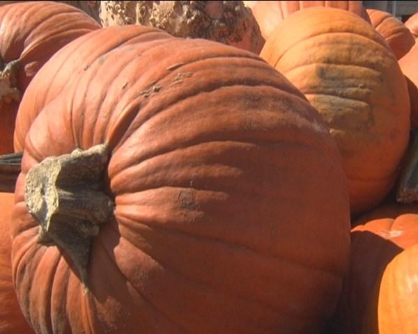 pumpkins_1442443541923.jpg
