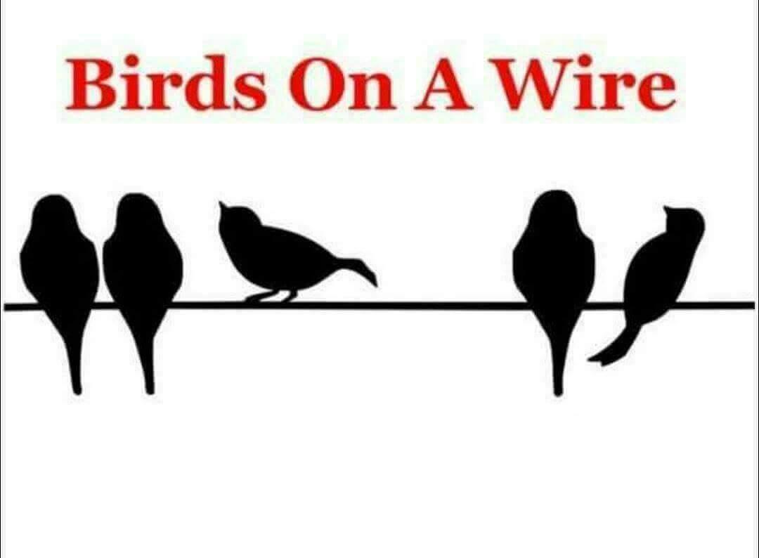BIRDS ON A WIRE 110216_1478124714616.jpg