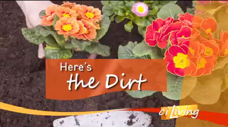 HERE'S THE DIRT OPEN_1498083513483.PNG