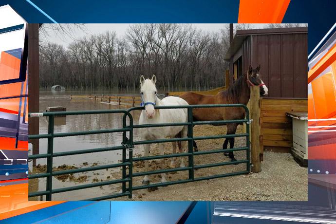 horse rescue 2_1519251733715.jpg.jpg