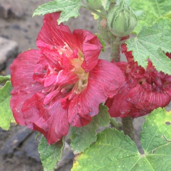 flower_1529437943826.jpg
