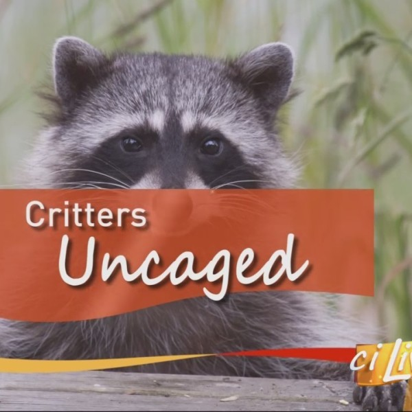 Critters Uncaged with Scovill Zoo