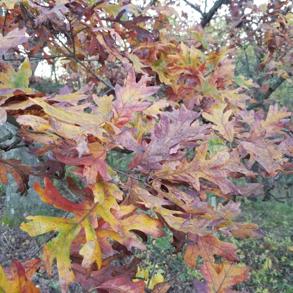 Leaves 1_1539813781677.jpg.jpg