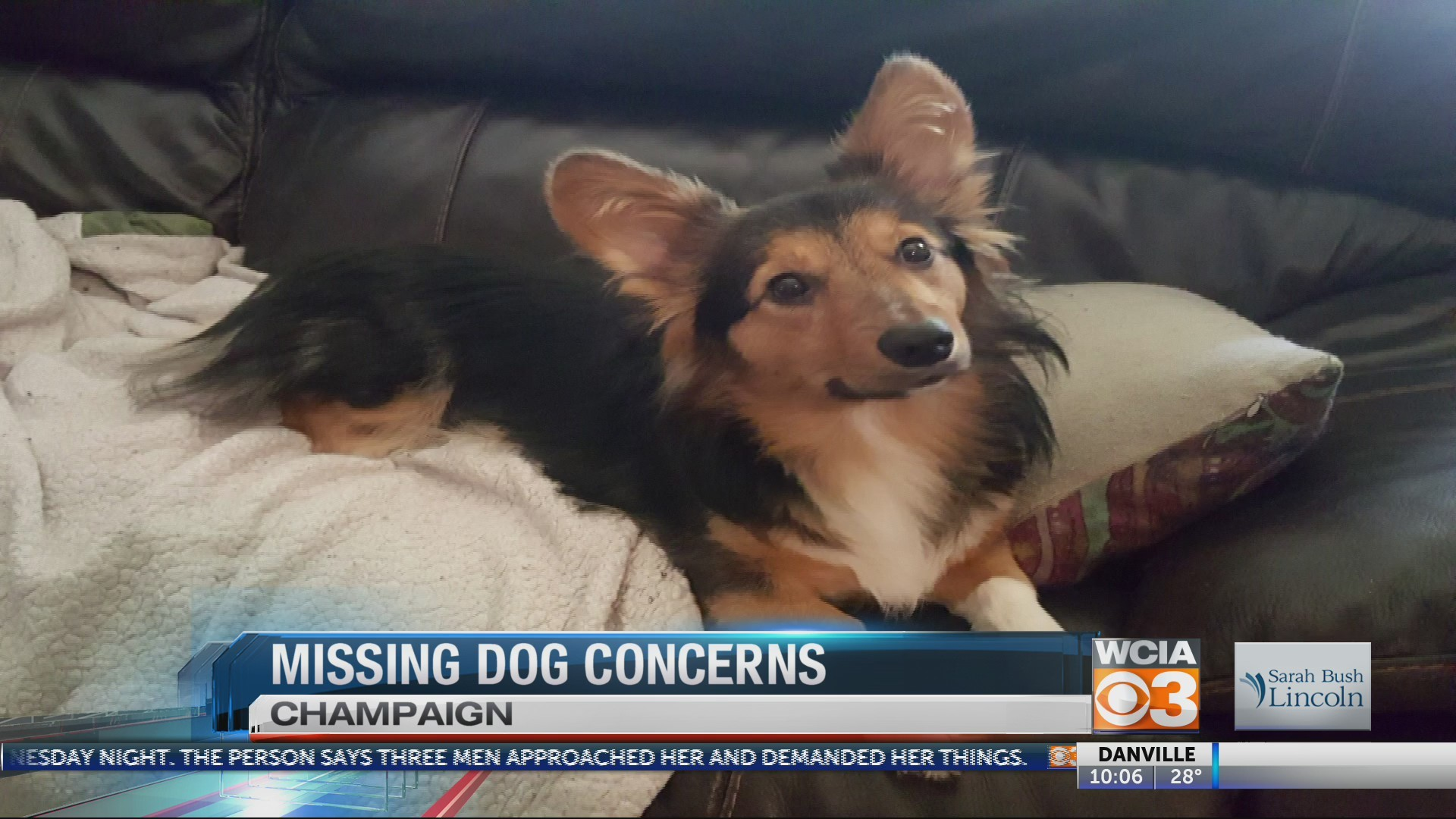 Missing dogs may not be coincidence
