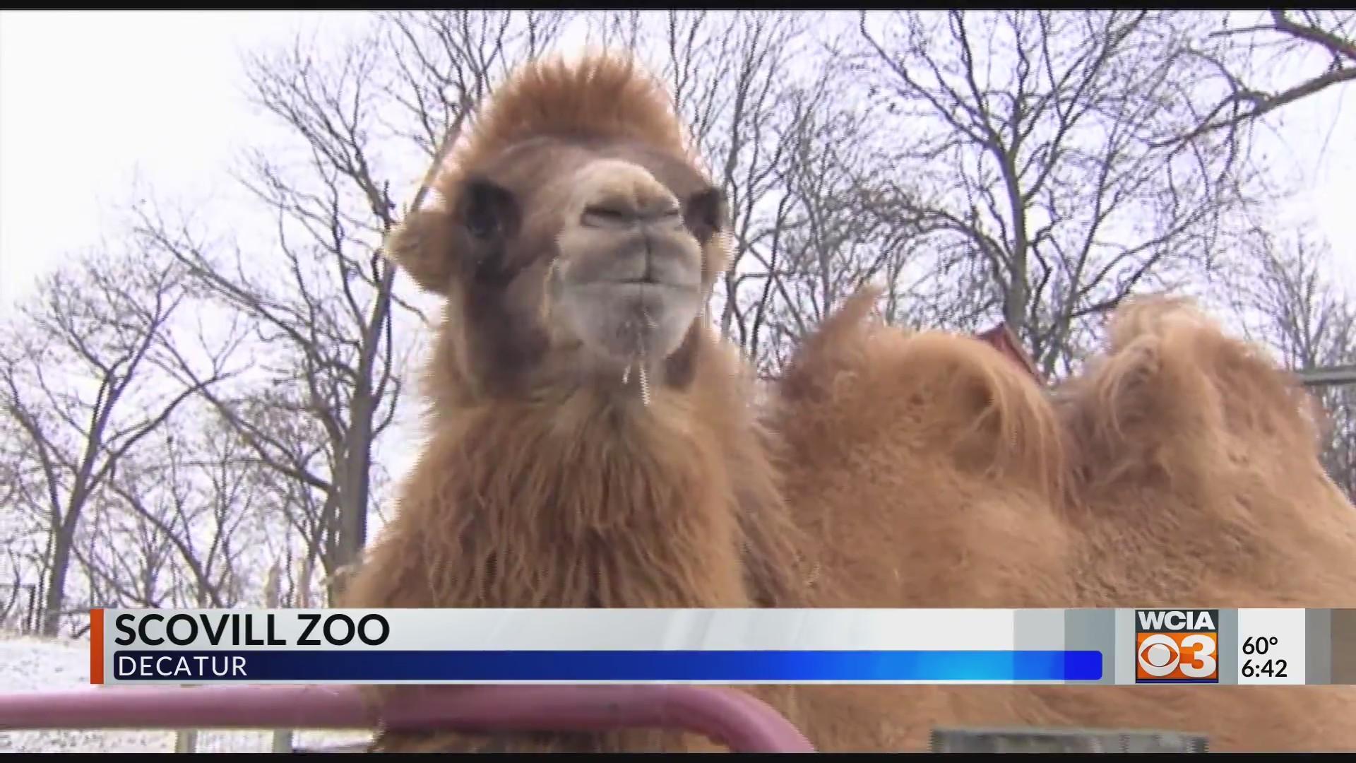 Scoville Zoo