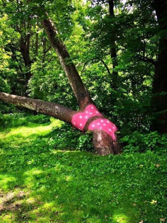 Decatur bikini 2 Bikini Tree dons Illini themed ensemble 8211 wcia com